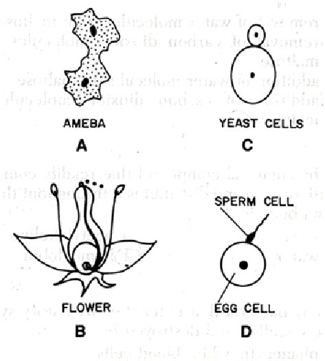 reproduction in organism  aiims online